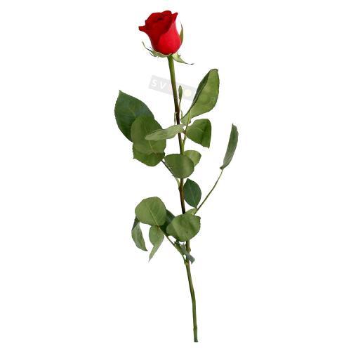 Голландская роза (красная, белая, розовая) 60 см